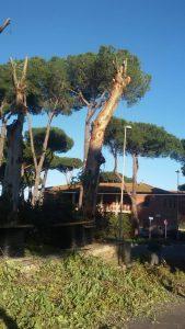 Fiumicino, albero pericolante: via Forcelletta chiusa al traffico