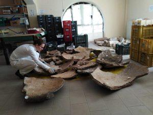 """Anzio, Dolium di epoca romana in frantumi al Parco di Villa Adele, L'Assessore Nolfi: """"Tutti i frammenti sono stati – ricoverati – al Museo"""""""