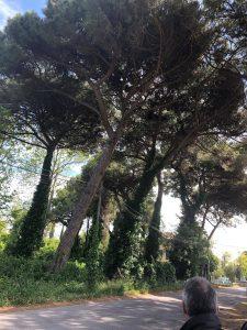 Fiumicino, Alberature: sopralluogo in via Rediuglia