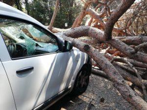 Fiumicino, Via Sestri Levante: rimosso il pino caduto