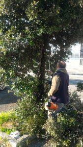 Fiumicino, Parco Leonardo: Proseguono i giorni i lavori di potatura degli alberi e sfalcio delle siepi